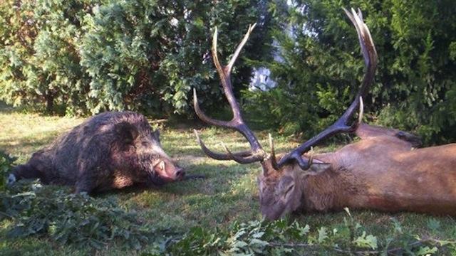 Животный мир Венгрии