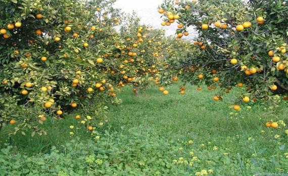 Австрія - знаменитий Цитрусовий сад